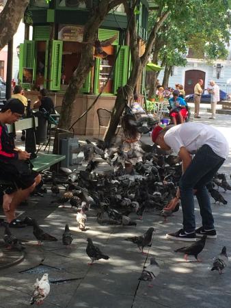 Plaza de Armas : pigeons