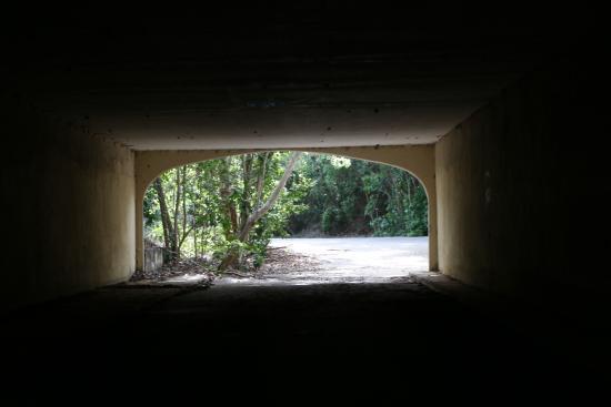 Dagny Johnson Key Largo Hammock Botanical State Park : Walking through the Tunnel, Remnants of the Failed Development