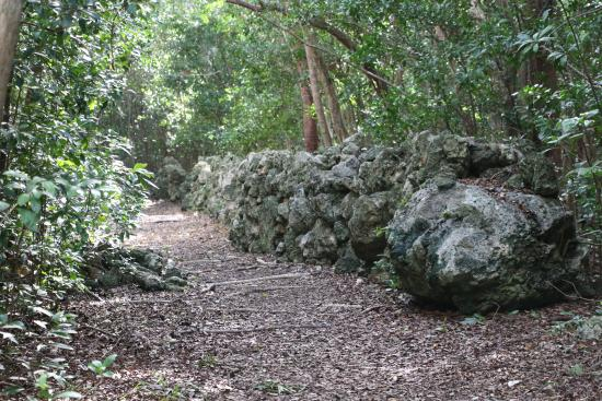 Dagny Johnson Key Largo Hammock Botanical State Park : Nature Trail