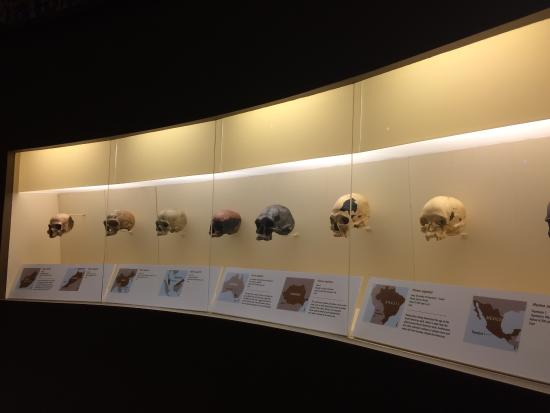 National Museum of Natural History: photo3.jpg