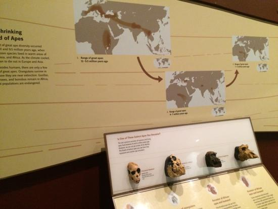 National Museum of Natural History: photo4.jpg