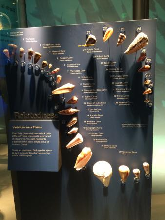 National Museum of Natural History: photo5.jpg