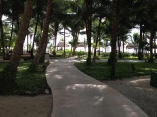 Sensimar Seaside Suites & Spa: view from our room and the large coconut grove