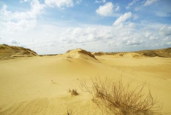 Oleshky Sands