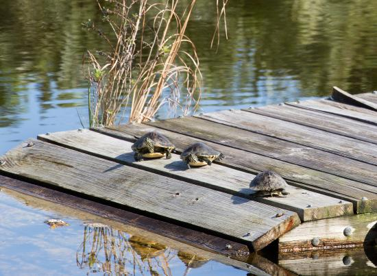Merritt Island, FL: turtles sunning at the welcome center