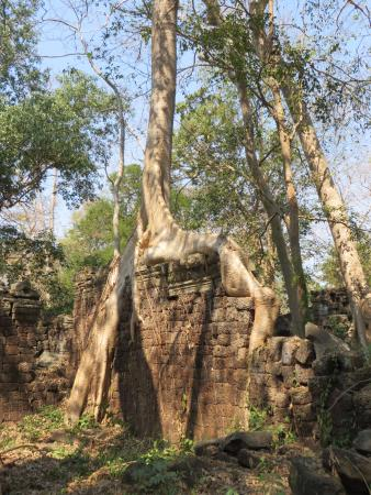 Banteay Meanchey Province, Cambodja: Trees hold up some walls, knock down others