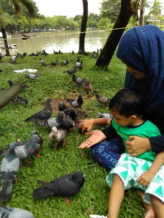 Chatuchak Park: Feeding bird
