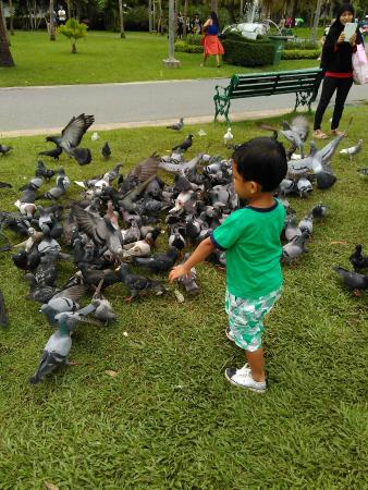 Chatuchak Park: A thousand dove