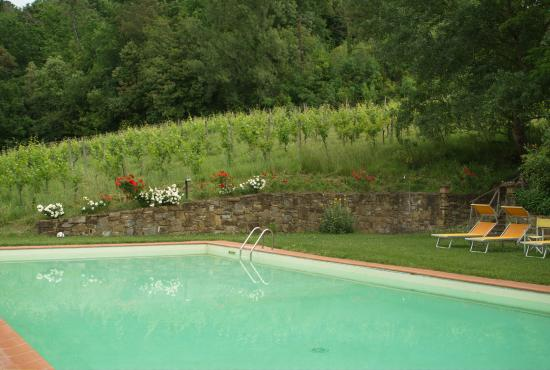 Montopoli in Val d'Arno-bild