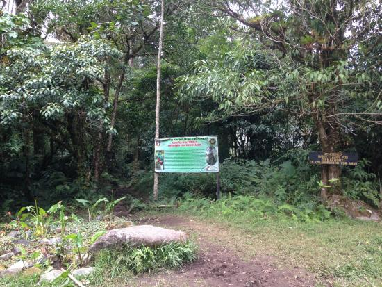 Sendero Los Quetzales (The Quetzales Trail): Start of trail after you have walked on road for approx 2 km (where black line turns to green)