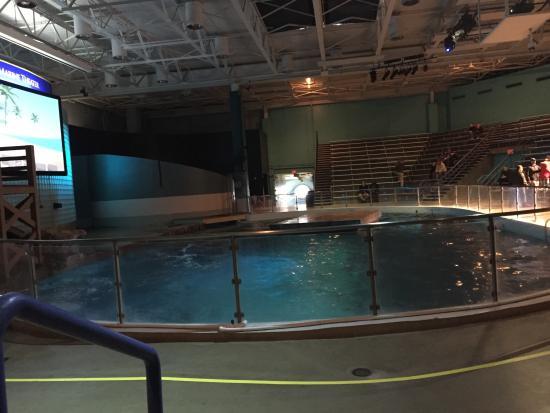 20151222 114122 Picture Of Mystic Aquarium