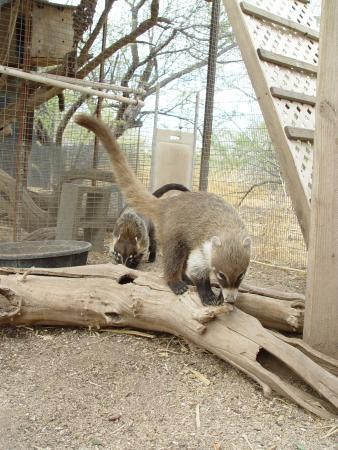 Tucson Wildlife Center