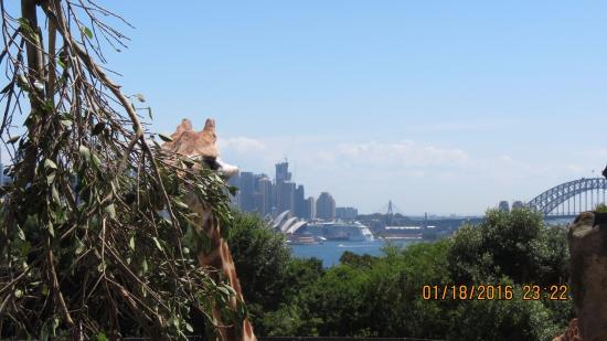 Mosman, Australien: giraffe and the Opera house