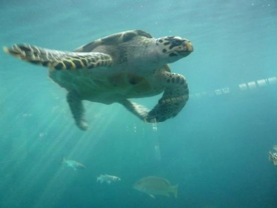 Foto de acuario mazatl n mazatl n tortugas tripadvisor for Acuario tortugas
