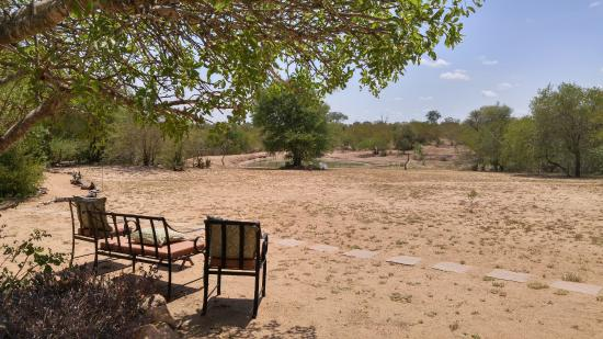 Timbavati Private Nature Reserve, แอฟริกาใต้: view to the nearby watering hole - animals will come drink!