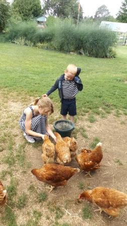 Lake of Bays, Canadá: feeding the hens