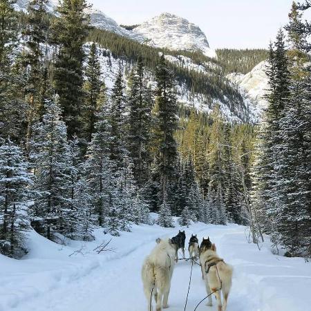 Snowy Owl Sled Dog Tours照片