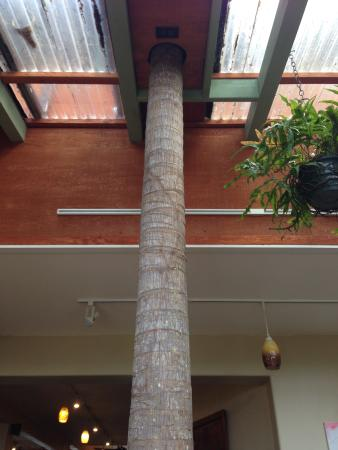 Kealakekua, Havaí: Tree growing out of the roof