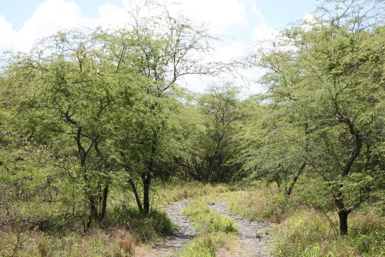 Makawao, Hawái: path
