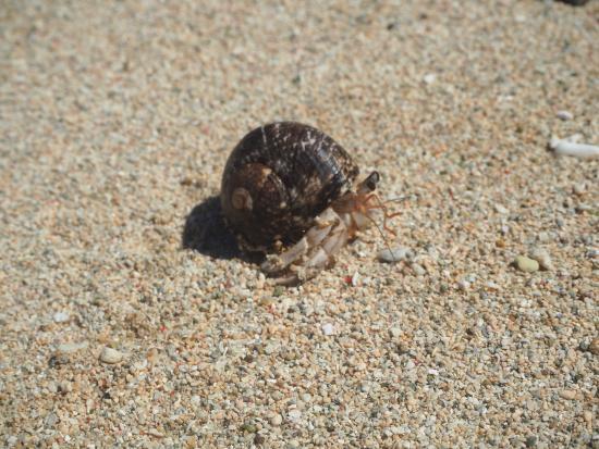 Beach Cocomo Photo
