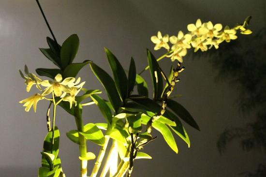 Orchid Lagan Place Palawan