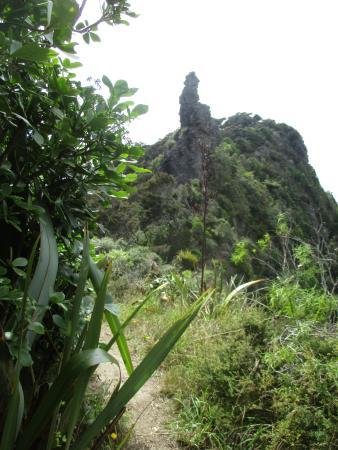 Whangarei, Yeni Zelanda: day two along bream ridge
