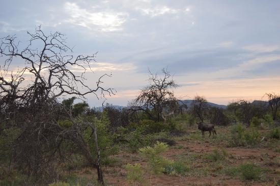 Madikwe Game Reserve รูปภาพ
