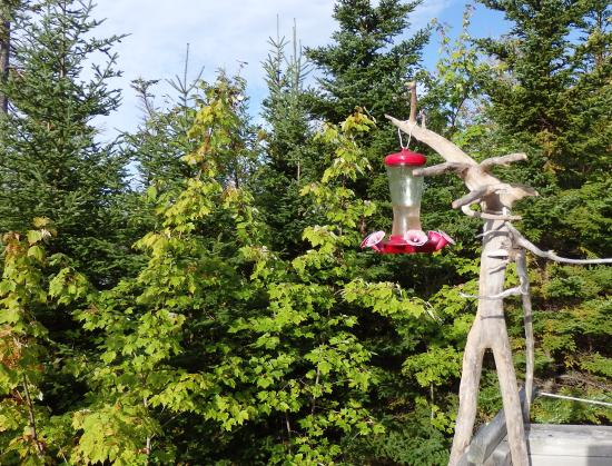 Cleveland, Canadá: Kolibri Futter und Beobachtungsstelle auf der Terrasse, im Oktober leider ohne Kolibris