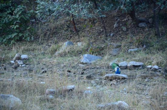 forest safari picture of india tour by car driver private day rh tripadvisor co za