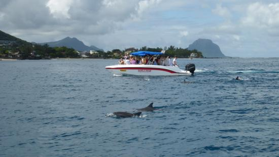 Flic En Flac: wild dolphins viewed from our boat