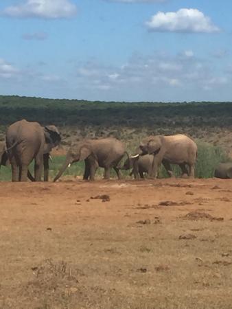 Addo Elephant National Park, Sudafrica: photo2.jpg