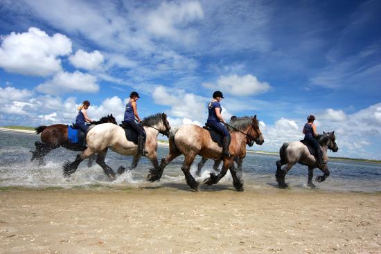 De Waal, Países Bajos: Strandrit van 3 uur op trekpaarden