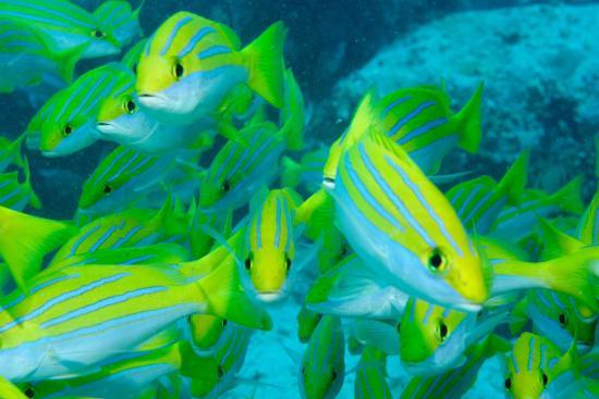 Victoria, Seychellene: photo0.jpg