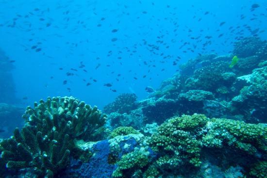 Victoria, Seychellene: photo1.jpg