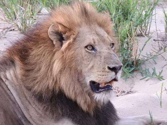 Mala Mala Private Game Reserve-bild