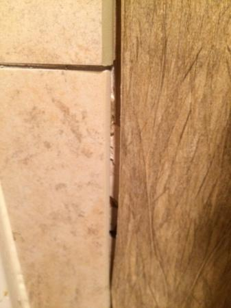 Avon, CO: Wallpaper peeling off of the walls with dirty scummy residue along the corners