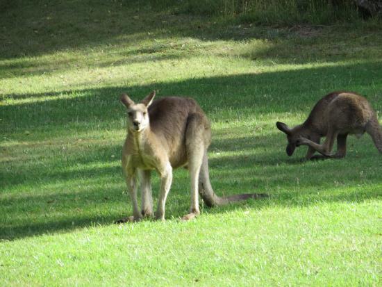 Crackenback, Austrália: Wildlife in the grounds