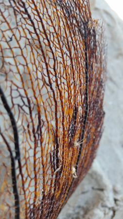 Isla de Caja de Muertos: All kinds of sea glass, coral and shells.