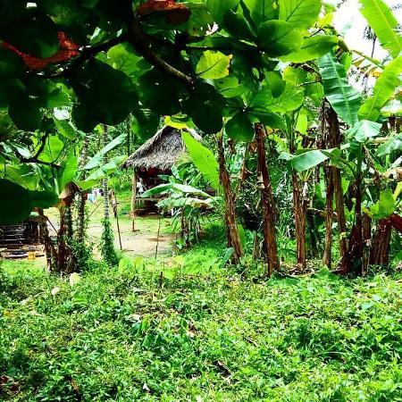 Бокас, Панама: casa en medio de la jungla