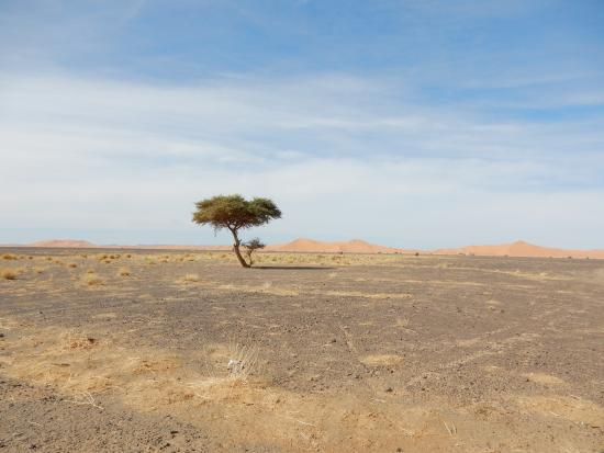 Morocco Excursions - Day Tours: Merzouga Desert, amazing how quiet this place is!