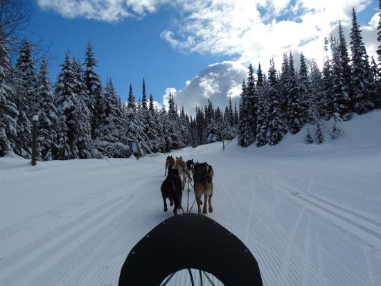 Sun Peaks, Canadá: The dogs guiding us through the snow