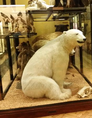 Tring, UK: Even sat down this polar bear was 5ft (nr 2mtrs) tall.