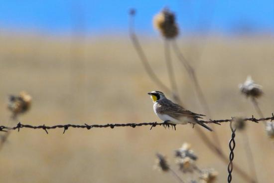 Maxwell, NM: Local birds