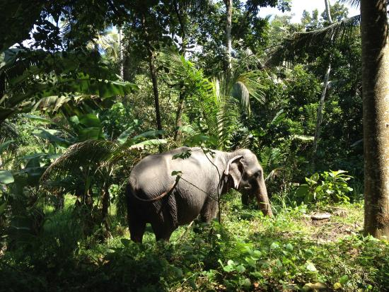 Kegalle, Σρι Λάνκα: Elephant Walk Experience