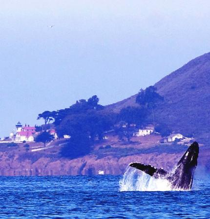 Avila Beach, Californien: Whales are often seen during the summer