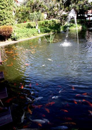 Hotel Botánico & The Oriental Spa Garden: viele Kois im Hotelteich