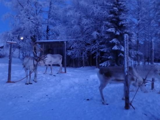 Kuusamo, Finland: photo6.jpg