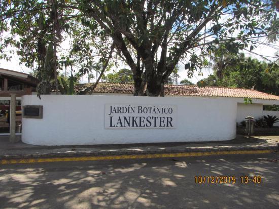 Brom lias e orqu deas picture of jardin botanico for Jardin lankester