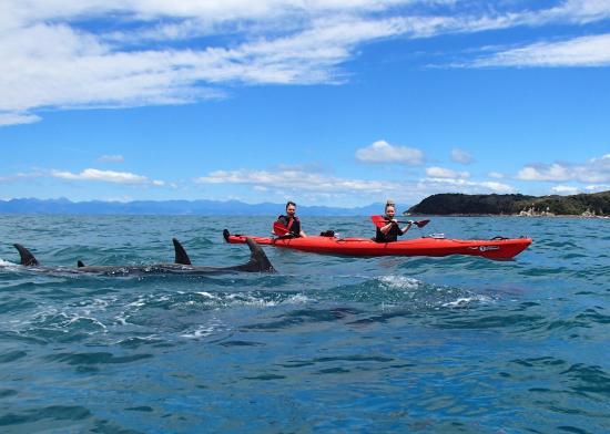 Marahau, Новая Зеландия: Dolphins in the bay