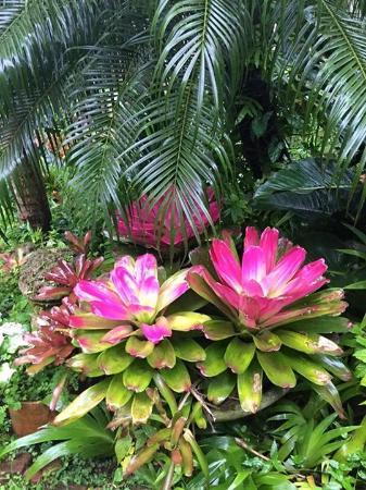 Hunte's Gardens: beauty